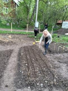 grönsaksland2