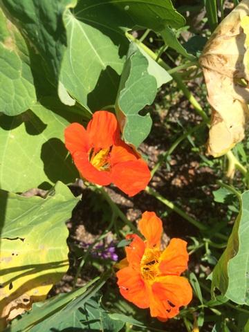 ätbara blommor1