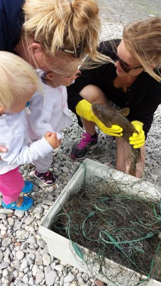 Barn tittar på när en kvinna håller upp en nyfiskad torsk på en strand på Gotland