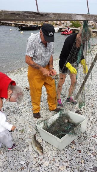 Rensning av nät på stenstrand Gotland