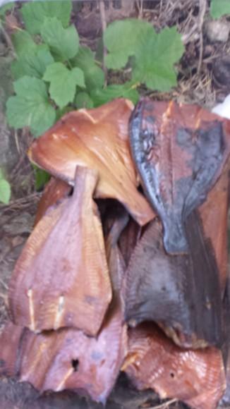 Flera flundror som är rökta i en plastburk