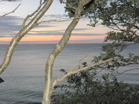 I förgrunden ett träd och utsikt över havet i solnedgång