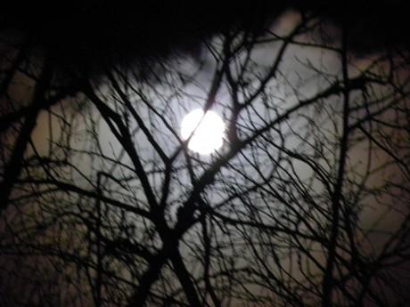 Fullmpne på himlen bakom kala trädgrenar