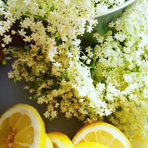 Fläderblommor och citronskivor