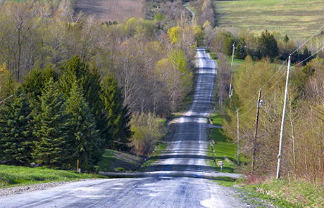 Country Road on an Afternoon in Spring