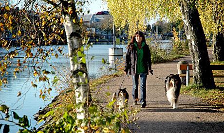 Annika ute och går med sina hundar