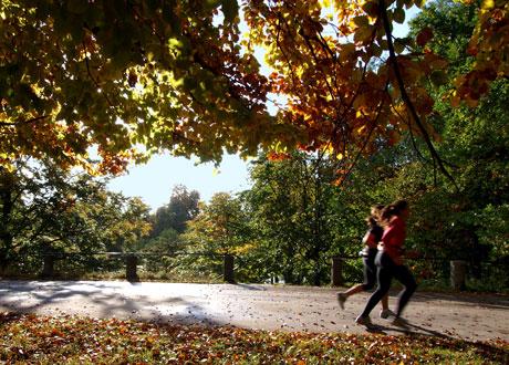 Två personer joggar på raksträcka i höstig omgivning