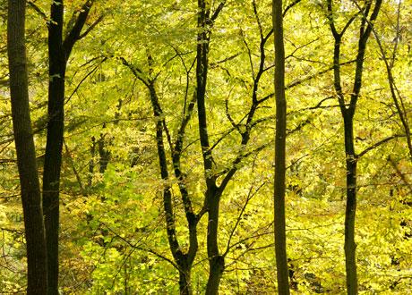 Naturbild skog i tidig höstmiljö