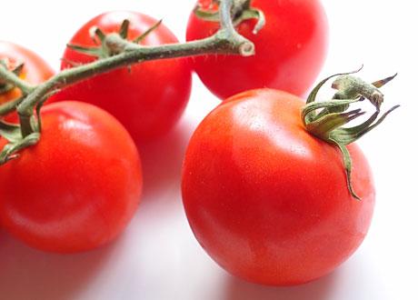 Röda tomater med grön kvist