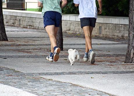 Två joggare och en liten vit hund