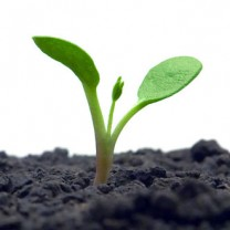 En grön växt