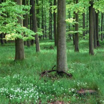 En grön skog
