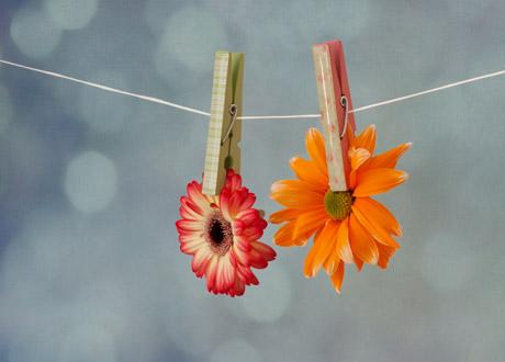 Två blommor i klädnypor på lina