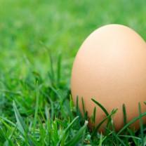 Ägg i gräset