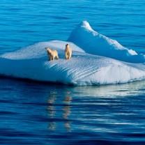 Isbjörnar på isflak