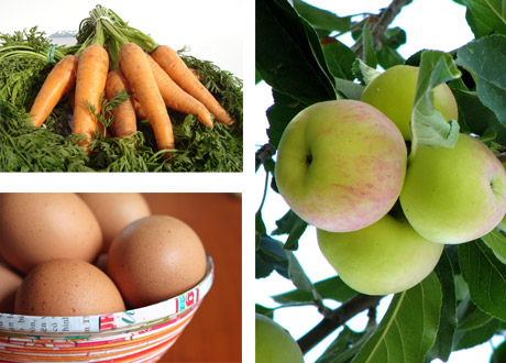 Morötter, ägg och äpplen i kollage