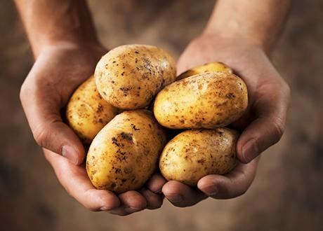 eko potatis naturskyddsföreningen
