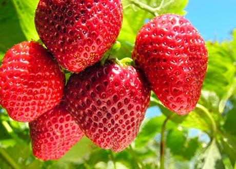 6 skäl att äta jordgubbar
