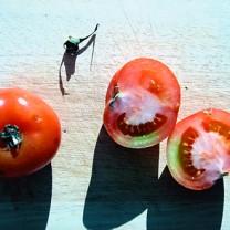Tomater på ett bord i solsken