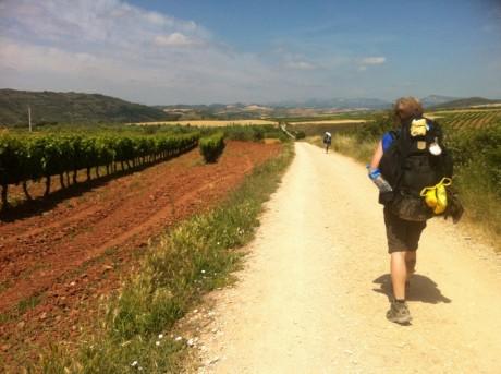 Uppför berg och nedför igen, genom skog och vinmarker. Caminon passerar genom fantastiska landskap.