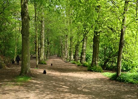 Lövskog och stig med kvinna och hundar