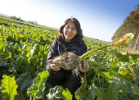 Nelida Leiva på fält med sockerbetor