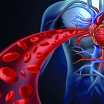 Animerad bild på kropp och hjärta