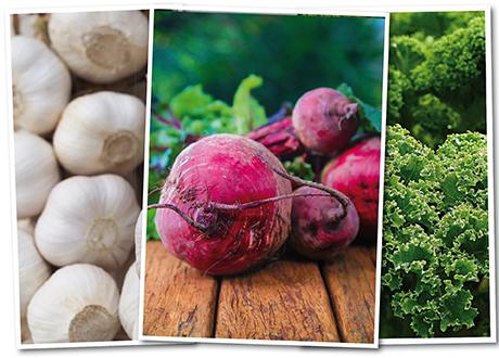 rödbetor, grönkål och vitlök