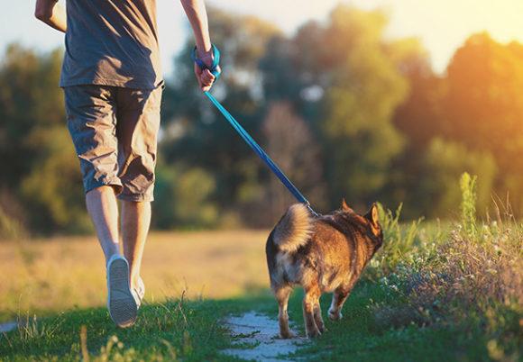 man går med hund