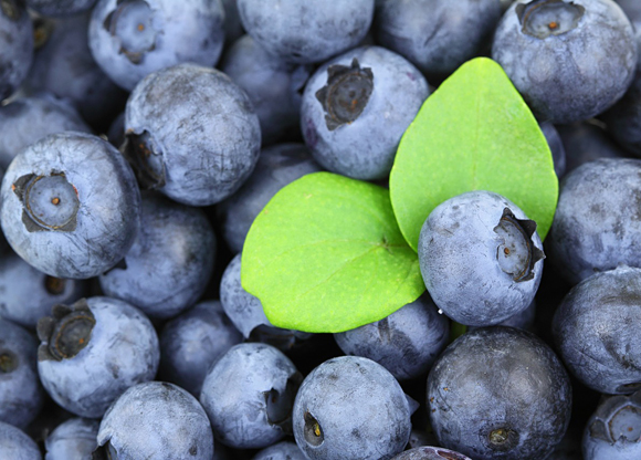 odlade blåbär nyttigt