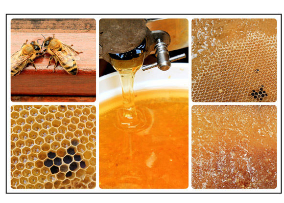 Kollage med bin och honung