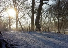 sol I vintermiljö