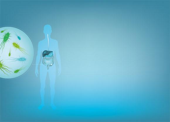 animerad bild mag- och tarmsystem och bakterier