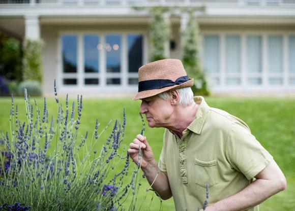 äldre man i hatt luktar på lavendel i sin trädgård