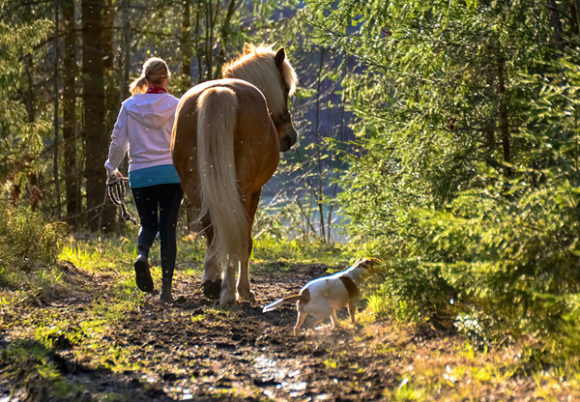 Flicka går i ljus skog med häst och hund