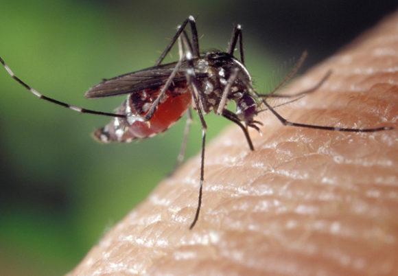 närbild mygga på hud