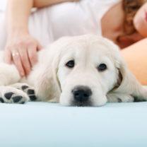gravid kvinna ligger intill sin hund