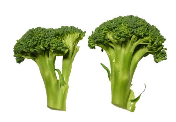 broccoli_Bra_for_magen