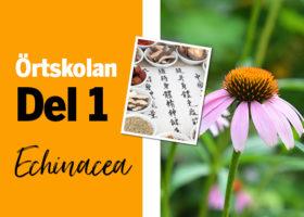 Örtskolan: Echinacea