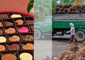 chokladask palmoljeodling