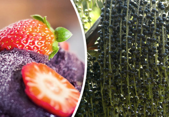 acai desserrt och växt