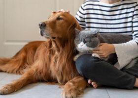 Kvinna kelar med en hund och katt i knät