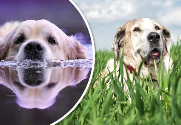 hund i gräns och simmar