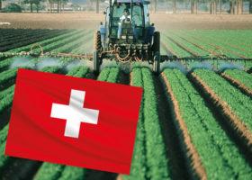 schweiz flagga åker som besprutas