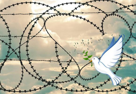 taggtråd fredsduva