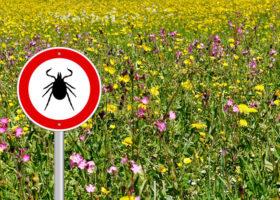 skylt varnar för fästingar