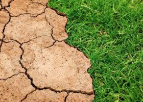 gräs och torkad mark