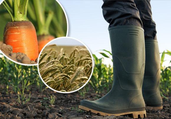 bondes stövlar morötter råg