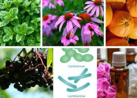 echinacea, oregano, apelsiner, fläderbär, probiotika och aromaterapi