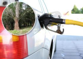 palmolja_biodiesel